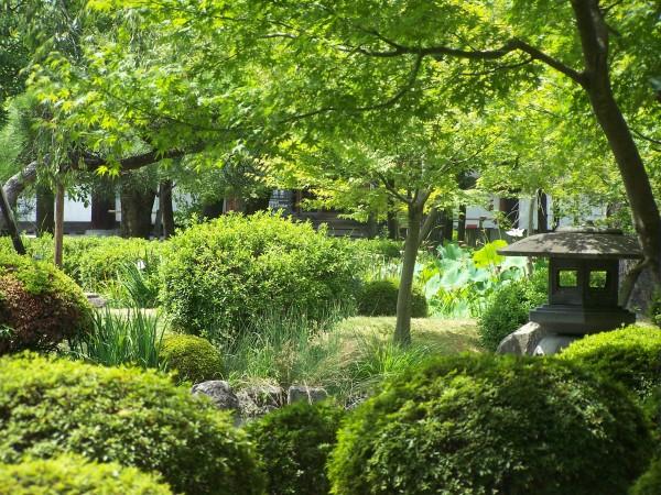 Un haiku per luglio a oriente di dove - Il giardino d estate ...