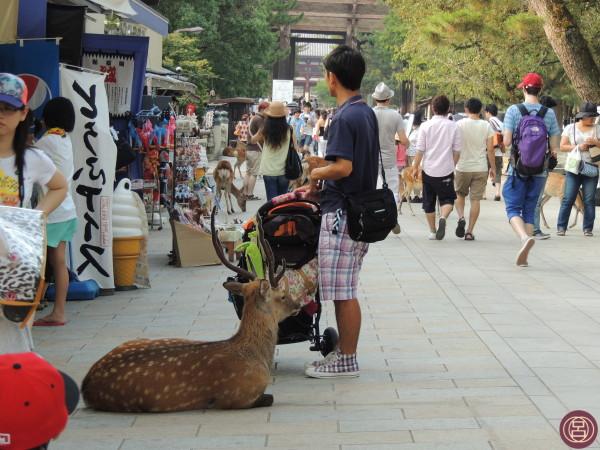 Nel pomeriggio di Obon, verso il Todaiji. Nara, agosto 2013.