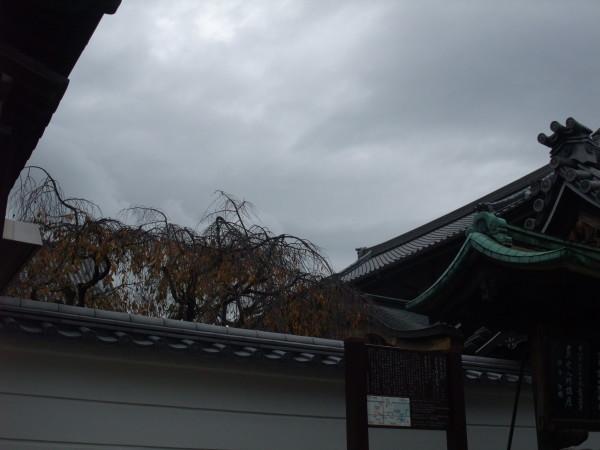 Nara, appena arrivati. 14 novembre 2015.