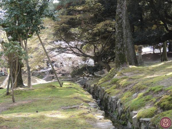 I prati di Nara a primavera. Aprile 2013.