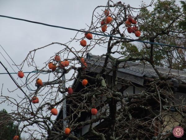 Un albero a Ohara. Novembre 2015.