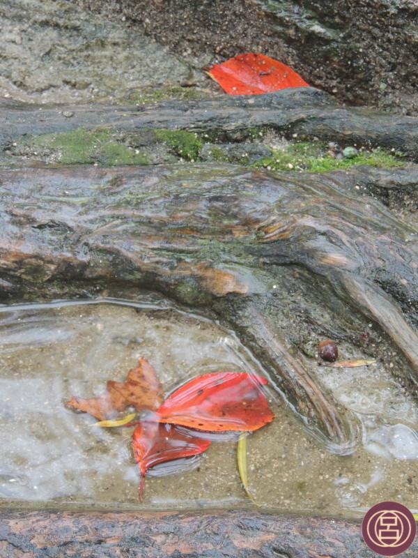 Mentre cade la pioggia. Miyajima, 17 novembre 2015.