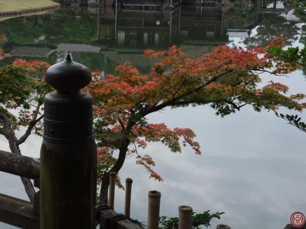 Lo scorso anno, nel giardino Genkyūen di Hikone. 23 novembre 2015.