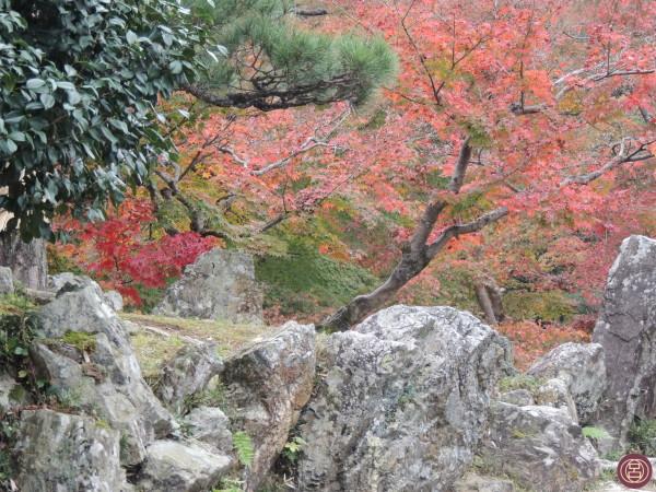 Nei presi del cstello di Hikone. In una bellissima giornata di novembre. Autunno 2015.