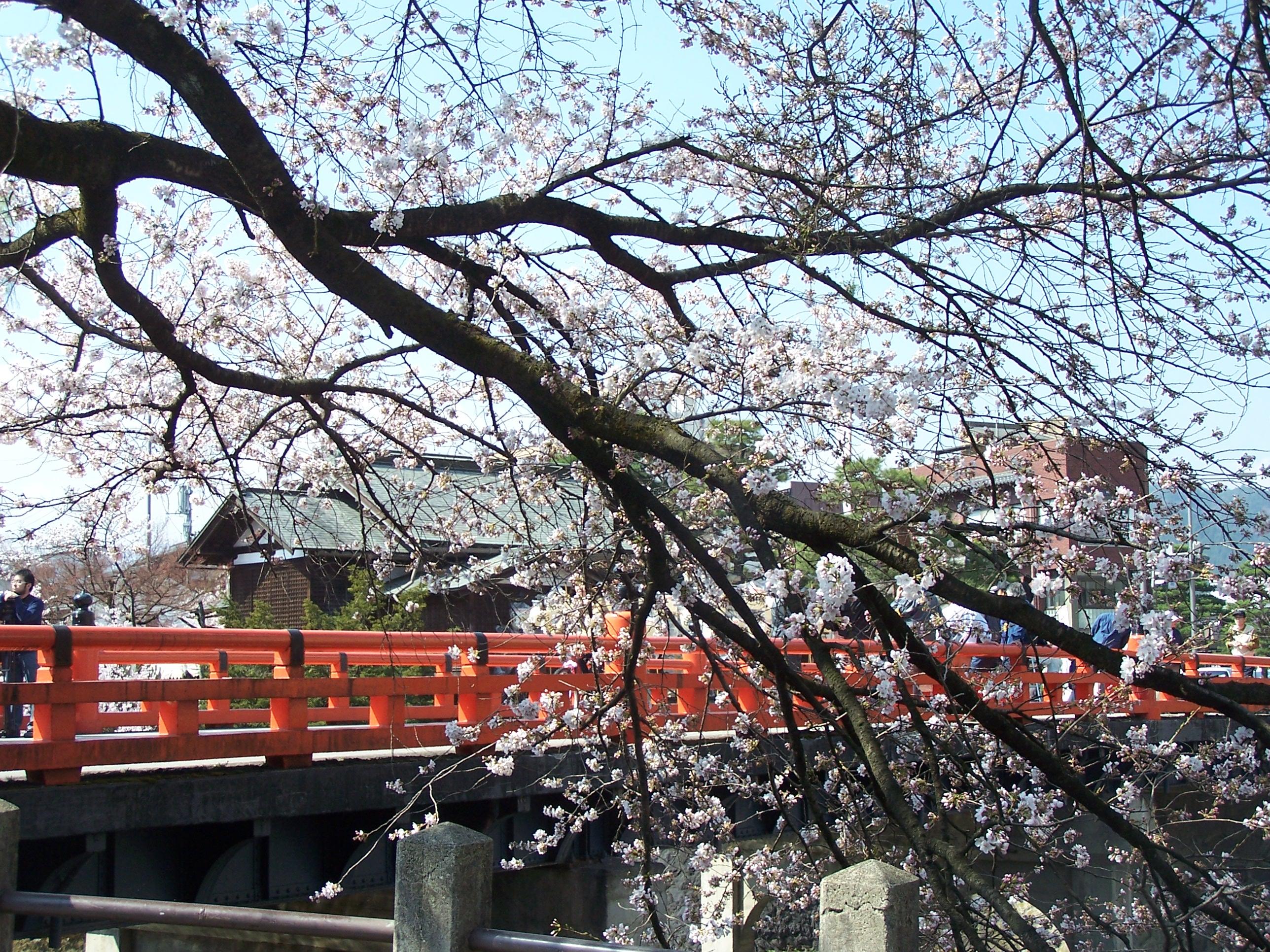takayama-sakura