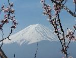 Il Fuji a primavera